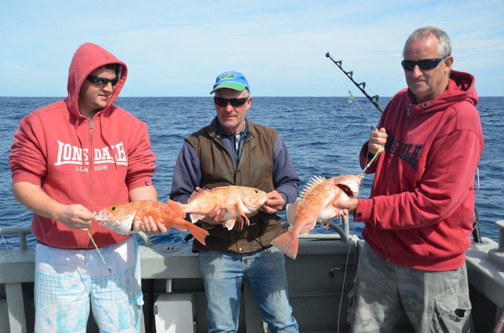 Deep sea fishing gallery for Sea perch fish